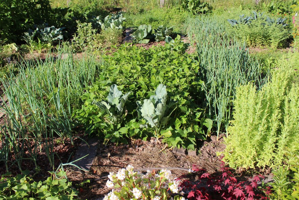 organic garden gardening homegrown permaculture biodynamic