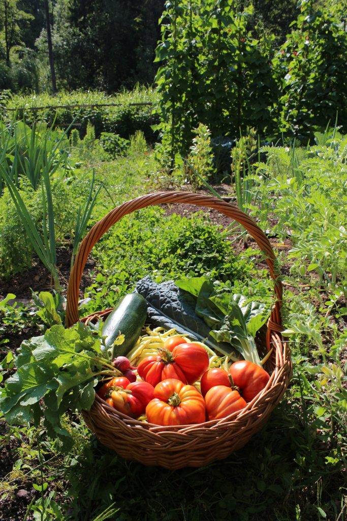 homegrown produce garden gardening organic self sufficiency sustainable