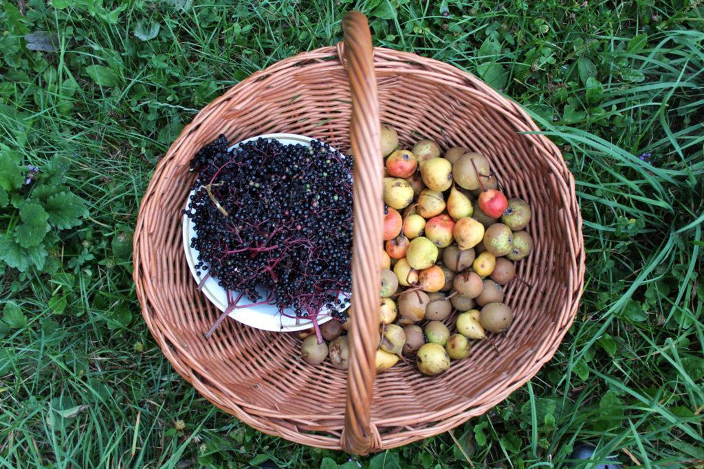 elderberry pear jam recipe