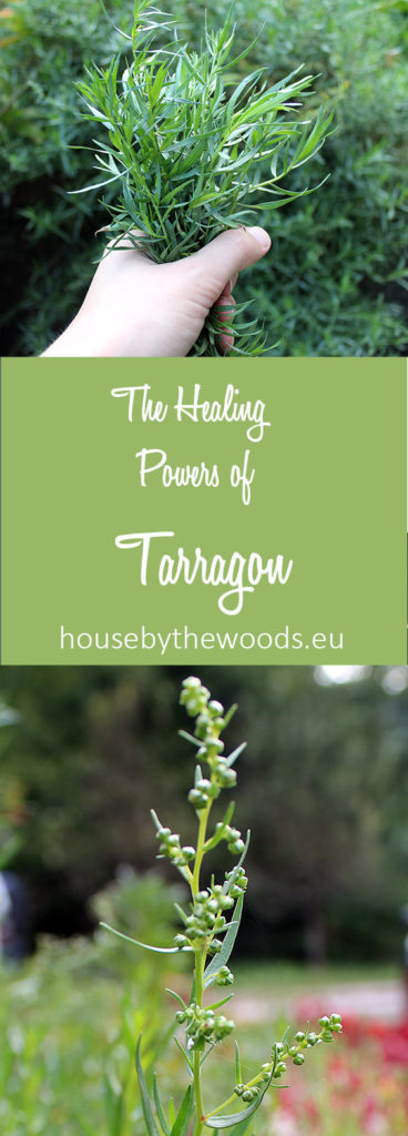 Get to konw all the healing benefits of tarragon and start growin and using it.