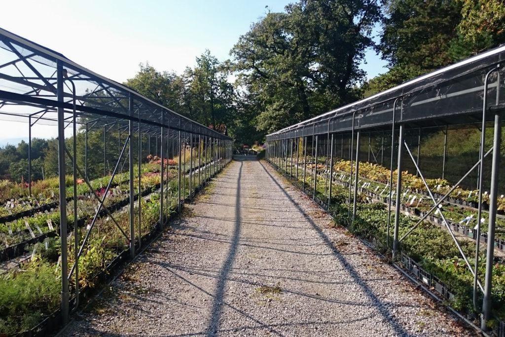 perennial nursery europe golob klancic