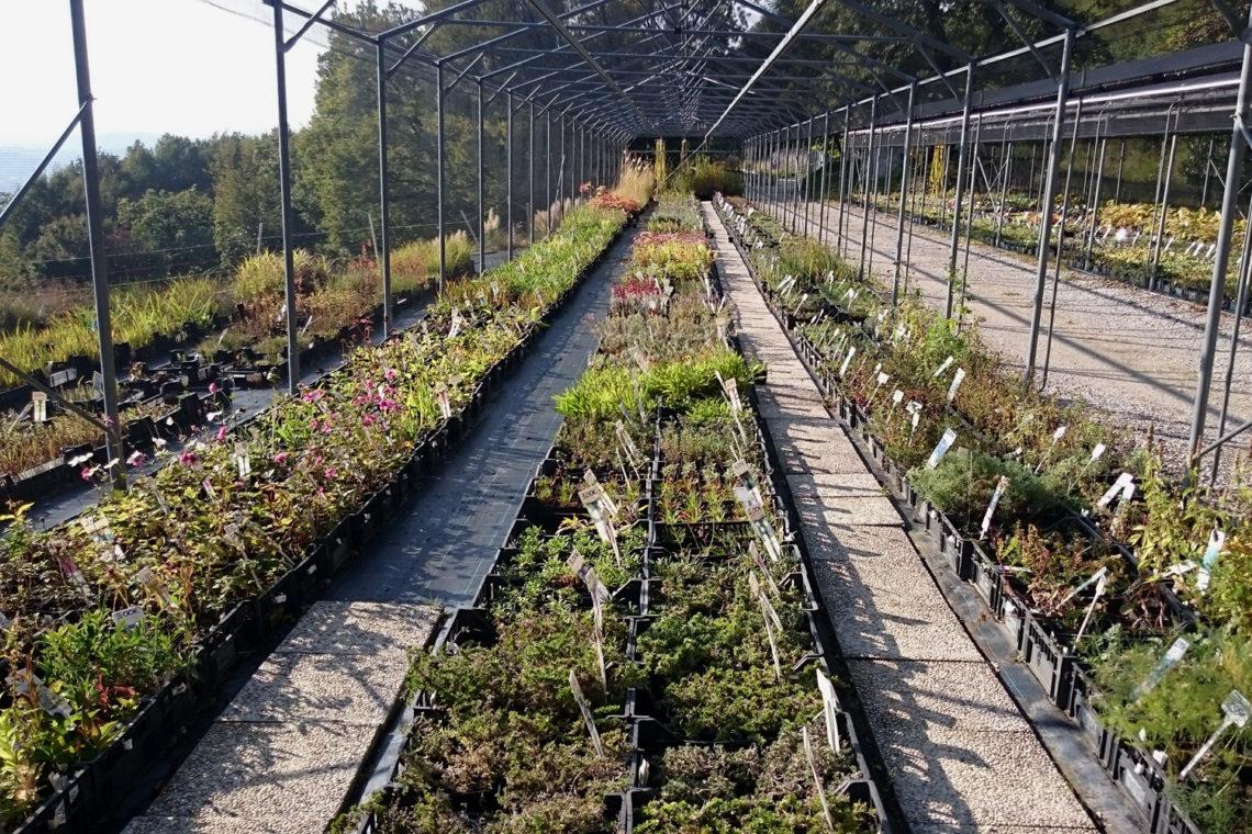 Visit at Golob-Klancic perennial nursery