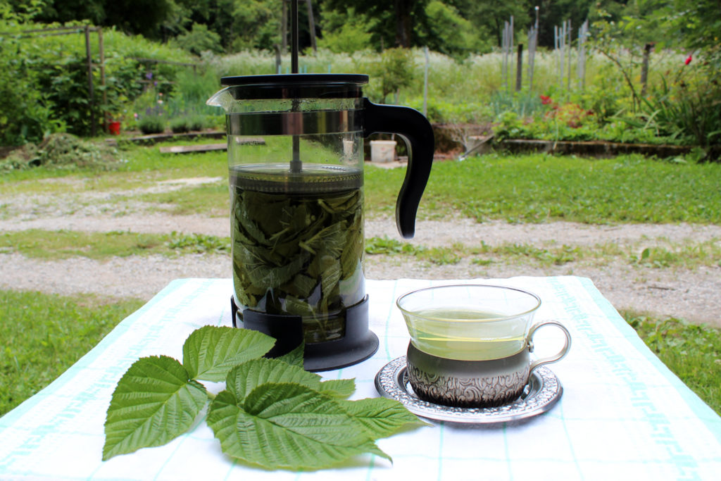 red raspberry leaf tea pregnancy use